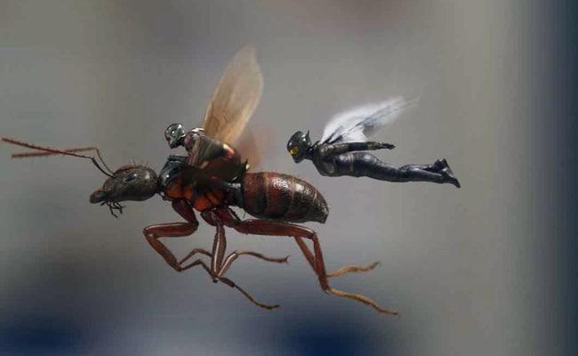 Ant Man and The Wasp Movie Review: धांसू एंटरटेनमेंट के साथ ऐंट मैन और वास्प की हंगामाखेज जुगलबंदी