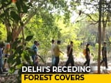 Video: Monsoon Wooding Gives A New Lease Of Live To Airshed Park In Delhi